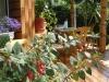 Wynajem apartamentow i pokojow w Poladze Holiday in Palanga - 14