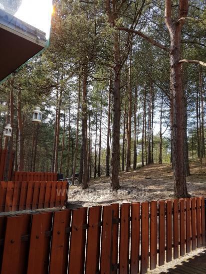 Jeden pokój apartament z niesamowitym widokiem na las sosnowy w Nidzie, Mierzeja Kurońska, Litwa - 2