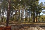 Jeden pokój apartament z niesamowitym widokiem na las sosnowy w Nidzie, Mierzeja Kurońska, Litwa