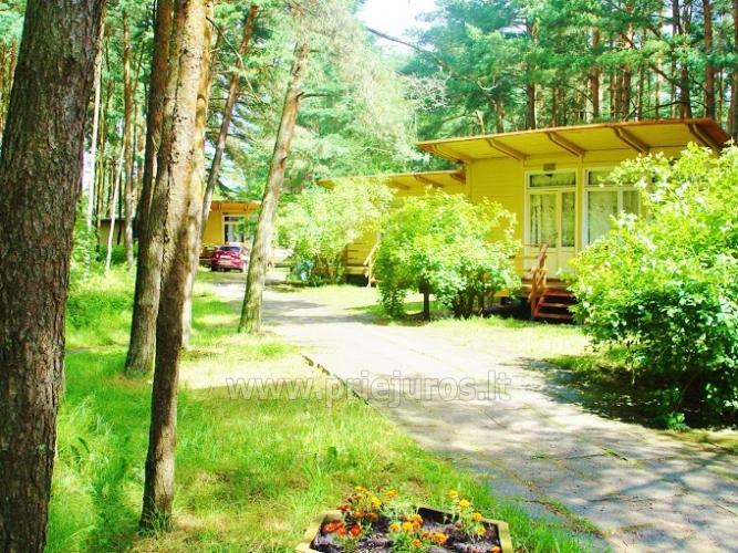 Domy drewniane w lesie sosnowym, w pobliżu kościoła w Sventoji - 2