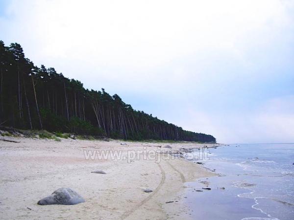 Wypoczynek tylko 80 metrów od morza, w lesie sosnowym - 15