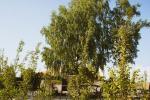Hotel Zaliasis slenis - 9