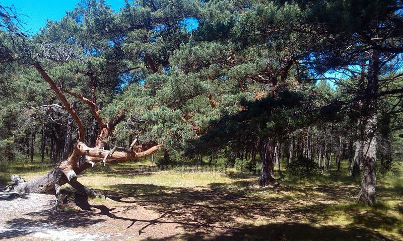 Obóz letni angielski dla dzieci 6-17 lat Narnia-2019 English OUTDOORS - 8