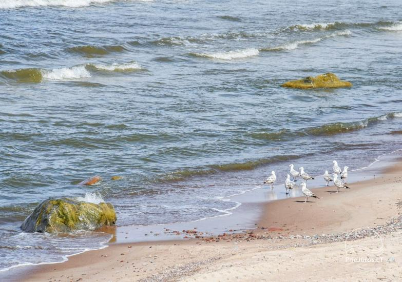 Willa w Karkle nad morzem - Seaside Villa Karkle - 3