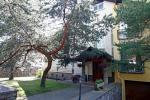 Birutes Villa. Goscinny dom w Poladze w pobliżu sosnowego lasu, 800 m od morza