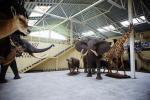 Mini zoo, safari w Klajpedskim rejonie w hotelu Gamtos Perlas *** - 3