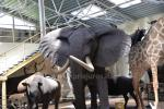 "Mini zoo, safari w Klajpedskim rejonie w hotelu ""Gamtos Perlas"" ***"
