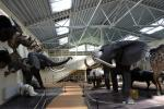 Mini zoo, safari w Klajpedskim rejonie w hotelu Gamtos Perlas *** - 4