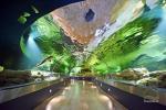 Litewskie Muzeum Morskie - Delfinarium w Klajpedzie