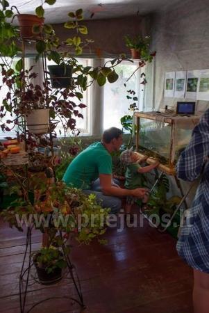 Wystawa żywych tropikalnych motyli - 4