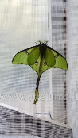 Wystawa żywych tropikalnych motyli