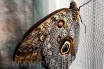 Wystawa żywych tropikalnych motyli - 6