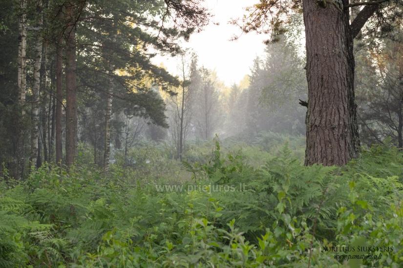 Wycieczki w lesie - 3