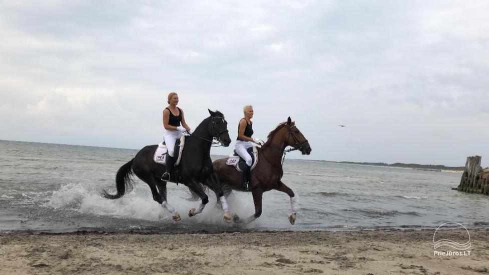 Zabawa z jazdą konną w parku wakacyjnym - 4