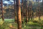 Apartment for rent in Palanga near the sea - 6